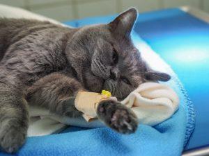 Tierarztpraxis Doc Pox